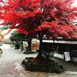 名古屋のリンパドレナージュサロンserendipityのセラピストが大好きな金沢の兼六園の紅葉の写真です