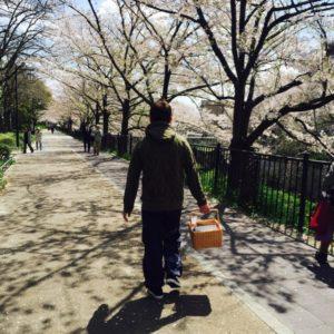 山崎川の花見